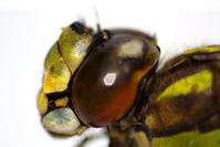 Dragonfly macro 2
