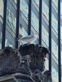 Urban Seagull 2