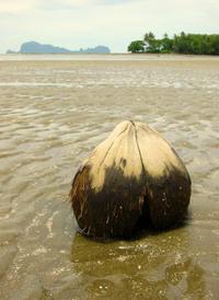 lovely coconut