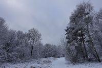 peaceful winter landscape 2