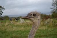 On Safari in Penrith