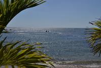 sunny blue sea