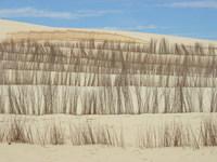 dune dude