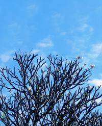 tree @ autumn