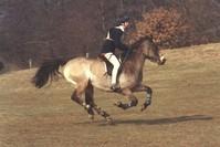 Equestrian Event 2