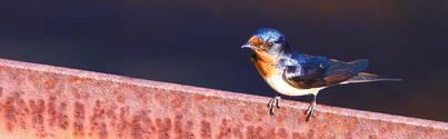 Facebook Header Size Bird N Rail