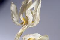 Dead Flower 3