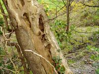 Tree-trunk 5