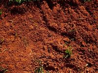 Mud terrain texture