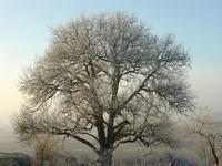 Glazed frost 3