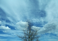 Awe Inspiring Tree and Sky