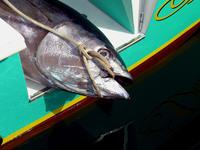Gomera Deep See Fishing 4