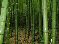 Bamboo grove 02