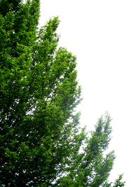 Washington Evergreen