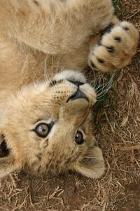 Cute Cuddly Cub...not 1