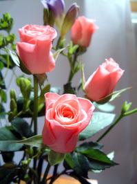 Rosebuds and Freesia 1