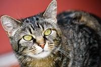Willow Cat 4
