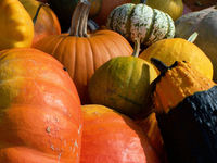 Pumpkins in fall 4
