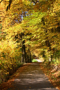 Autumn arrived 3