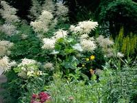 nature in my garden
