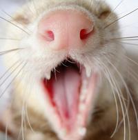 happy ferret