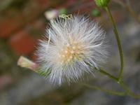 Flowers Flores 28
