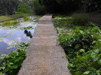 Landscape nature and plants 2