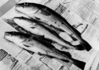 fish_neewspaper