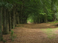 Woods of the Veluwe