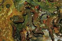 Algae 6