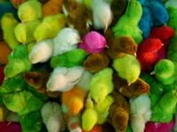 colourfulchicks