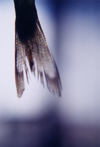 fish tail 2