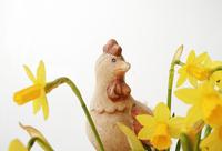eastern daffodils 2