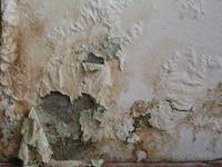 Paint Cracks 2