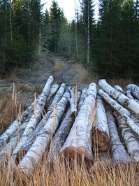 Timber 1