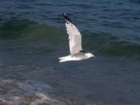 Bethany Beach 3