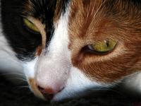 My cat hates me - Mi gata me odia 1