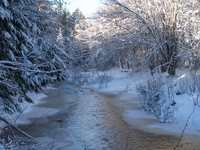 winter wonder land