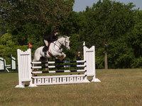 Gray Horse Jumping