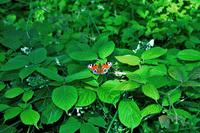 Butterfly in the open
