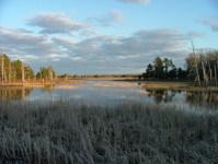 Sun shine over marsh