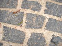 rock soil