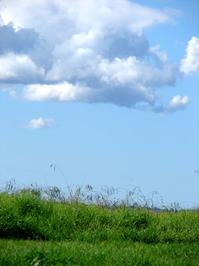Sky & Grass 2