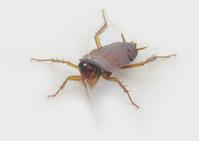 Mr. Cockroach
