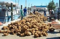 Boatload of Sponges