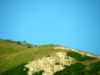 Open Pastures 2