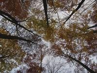 Autumn tops