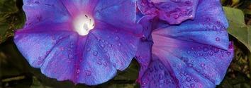 Flower panels 6