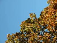 sky&leaves 2