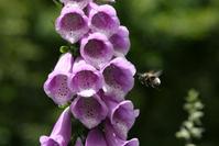 Flower macro 1